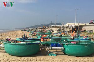 Trúng luồng cá, ngư dân kiếm cả chục triệu sau 3-4 giờ đi thuyền thúng