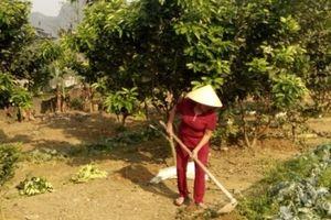 Hà Tĩnh nâng cao thu nhập nông dân từ mô hình vườn mẫu