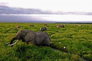 Từ năm 1970, động vật hoang dã giảm 60%