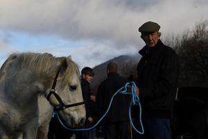 Kỳ lạ hội chợ nông sản ven đường của Ireland