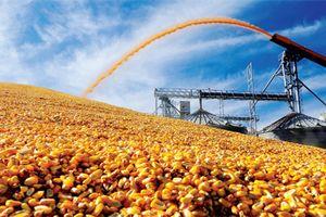 Hơn 14 triệu tấn ngô, lúa mì, đậu tương và hạt điều được nhập về Việt Nam