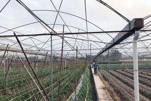 Tạo dựng giá trị bền vững cho thực phẩm Quảng Ninh