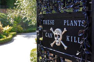 Khu vườn trồng hơn 100 loài cây độc chết người ở Anh