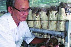 Tây Ninh: Trồng được nấm quý, dân muốn ăn cũng nhẹ tiền mua