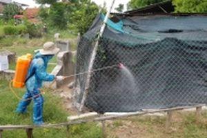 Phú Yên khẩn trương triển khai các biện pháp phòng, chống dịch cúm A H5N6