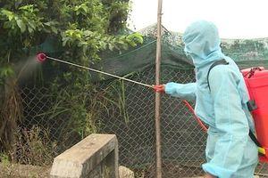 Xuất hiện ổ dịch cúm H5N6 độc lực cực mạnh ở Phú Yên