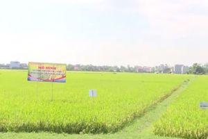 Ứng Hòa: Tăng cường sản xuất nông nghiệp theo hướng công nghệ cao