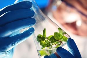 Dòng vốn từ Trung Quốc đổ dồn về các công ty công nghệ sinh học Mỹ