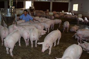 Thực hiện đồng bộ các giải pháp phòng và ngăn chặn nguy cơ xâm nhiễm bệnh dịch tả lợn Châu Phi