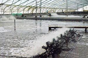 Không giảm giá thành sản xuất, bài toán '10 tỉ USD' của con tôm Việt khó đạt