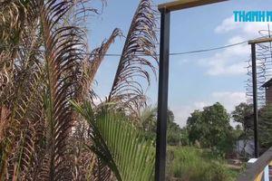 Triệt phá trường gà trong vườn dừa ở Bến Tre