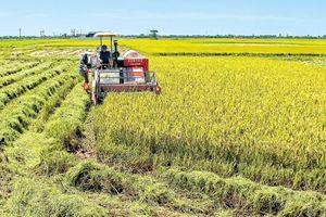 Hà Nội: Cải tạo, chống xuống cấp 107 công trình trong lĩnh vực nông nghiệp