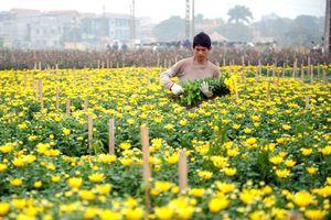 Hà Nội: Đến năm 2020 chuyển đổi 1.844ha cây trồng trên đất lúa