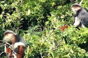 Sớm thành lập khu bảo tồn Động Châu - khe Nước Trong