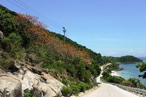 Quảng Nam: Ra quy chế quản lý hoạt động dịch vụ du lịch tại Cù Lao Chàm