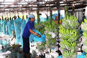 XK trái cây: Thách thức từ thị trường chính