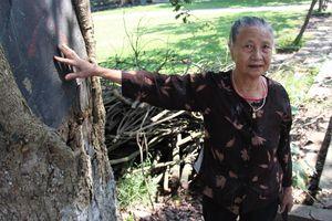 Dân lập chốt canh giữ 3 cây sưa trăm tuổi ở đình làng