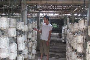 Kinh nghiệm trồng nấm ăn, nấm dược liệu của một thương binh
