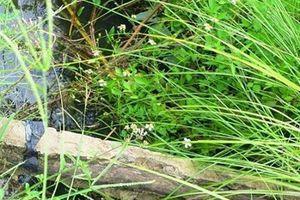 Bò trượt chân ngã, làm lộ giằng bê tông cốt... gỗ tại công trình kênh thủy lợi