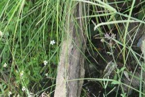 Bê tông cốt cây do công nhân nghịch ngợm