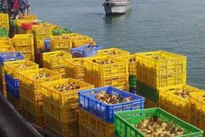 Bắt giữ lượng lớn gà giống Trung Quốc 'đi đò' sang Việt Nam
