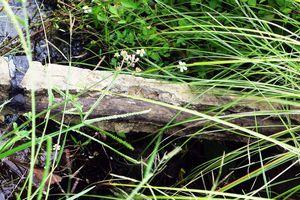 Kiểm tra vụ bê-tông làm bằng cốt... cây tại Bình Định
