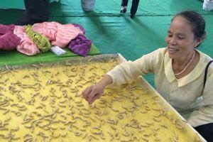 Duy nhất Việt Nam: Cụ bà luyện tằm tự dệt chăn tơ, bắt cọng sen 'nhả' lụa