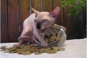 20 hình ảnh chứng minh mèo Sphynx không chỉ 'mát mẻ' mà còn cực kỳ ngầu