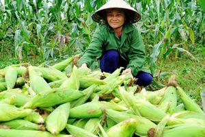 Quảng Bình: Đột phá trong cải tạo vườn tạp