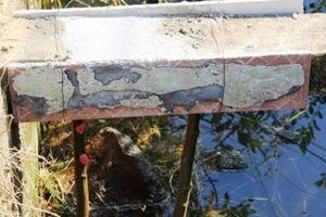 Bò trượt chân ngã làm lộ bê tông cốt cây: Bịt kín các vết hư hỏng