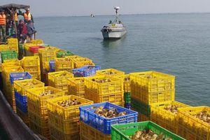 Quảng Ninh: Bắt đò chở lậu 50.000 con gà từ Trung Quốc về Việt Nam