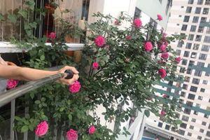 Mẹ Hà Nội tiết lộ 'thần công' chăm cây lớn nhanh như thổi nhờ 1 thanh đậu phụ
