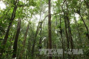 Xã hội hóa trong bảo vệ và phát triển rừng