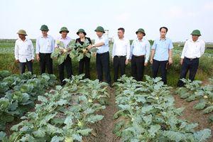 Đồng chí Phó Bí thư Thường trực Tỉnh ủy thăm một số mô hình kinh tế nông nghiệp