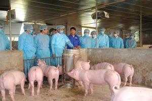 Phòng, chống dịch tả lợn châu Phi xâm nhiễm vào Hà Nội: Siết chặt kiểm soát, kiểm dịch