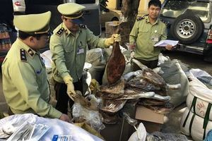 Ôtô vận chuyển 100kg thịt chân giò lợn không rõ nguồn gốc