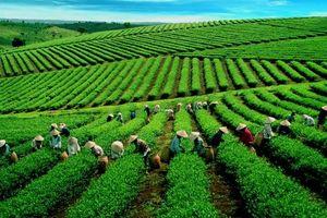 Tăng cường giám sát khi chuyển đổi đất nông, lâm trường