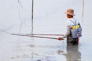 Đáng lên án cảnh tượng đánh bắt cá đồng mùa lũ rút theo kiểu hủy diệt ở ĐBSCL