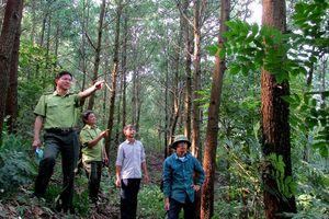 Chủ động triển khai phòng cháy, chữa cháy rừng mùa khô