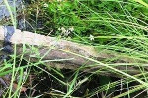 Bò trượt chân ngã, lộ bê tông cốt cây: Đập 11 thanh 'soi' chất lượng