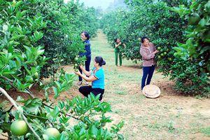 Thôn, bản nông thôn mới ở huyện miền núi Con Cuông