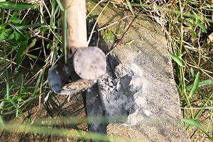 Bình Định: Không tìm thấy thêm thanh giằng bê-tông bằng cây gỗ