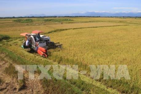 Giá trị xuất khẩu gạo tăng