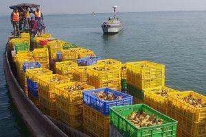Bắt quả tang đò chở 50.000 gà giống từ Trung Quốc về Việt Nam