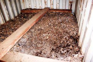 Hải Phòng: Vảy tê tê nhập lậu giấu trong container gỗ
