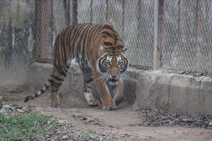 Trái Đất mất 60% số lượng động vật hoang dã trong 40 năm