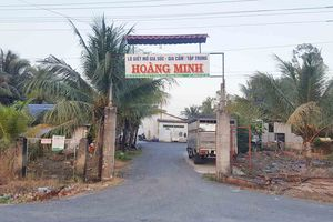 Thị xã Bình Minh (Vĩnh Long): Người dân khốn khổ vì Lò giết mổ Hoàng Minh xả thải gây ô nhiễm môi trường