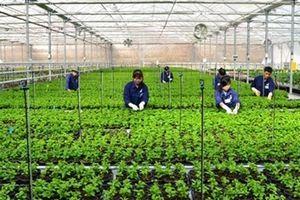 Việt Nam - điểm đến đầu tư đầy sức hút với Nhật Bản