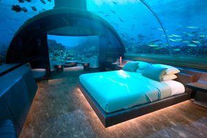 Ngủ cùng với cá