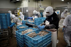 Món ăn Nhật 'quốc hồn quốc túy' bị biến đổi khí hậu đe dọa